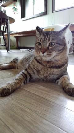 4ひきのネコ