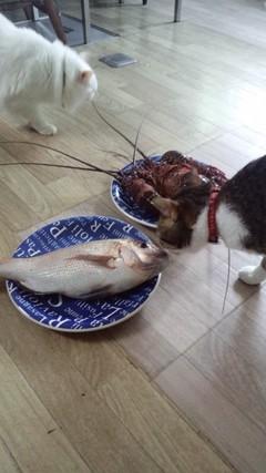 伊勢エビと鯛とネコとネコ